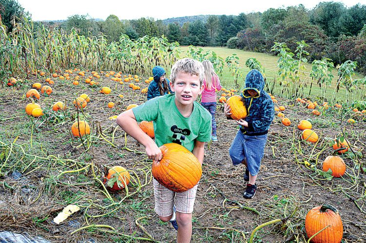 Children braved the rain to harvest their pumpkin crop, in order to sell them at Fish Hawk Acres in Buckhannon.