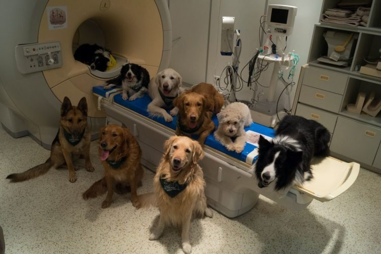 AP Photo In this undated photo provided by the MR Research Center some trained dogs involved in a study to investigate how dog brains process speech sit around a scanner in Budapest, Hungary. Scientists have found that dogs use the same brain areas as humans to process language.