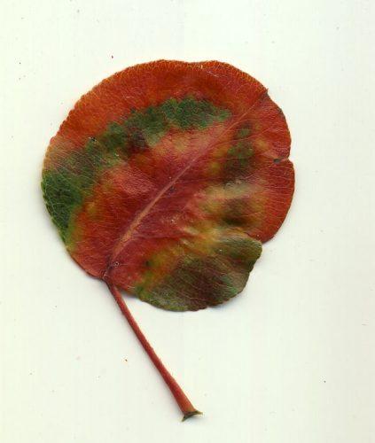 leaf-peeping-4