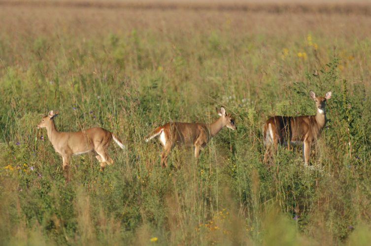 Photo Provided Hunters harvested 66,759 white-tailed deer in Ohio during the recent deer-gun season this year.