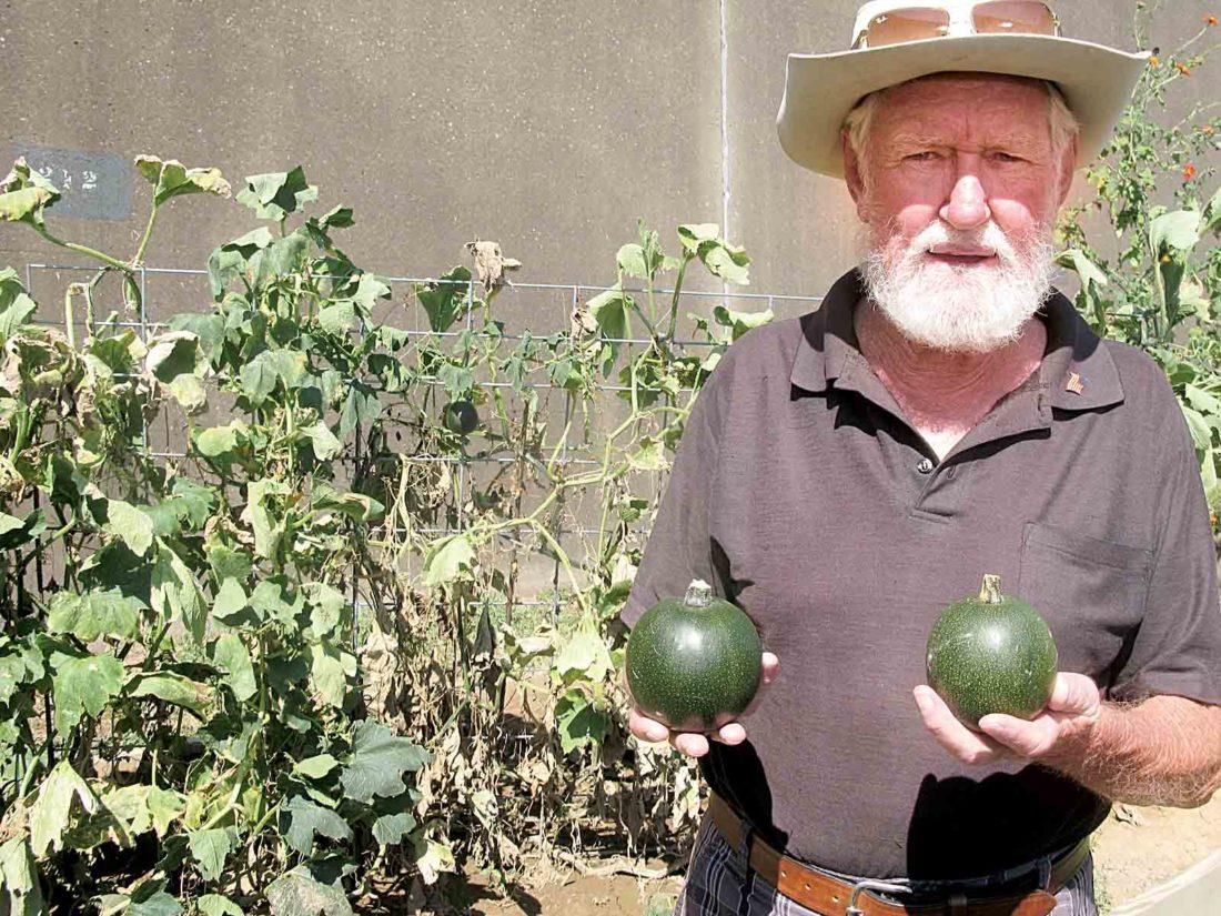 South Africa Native Plants Gem Squash At Community Garden